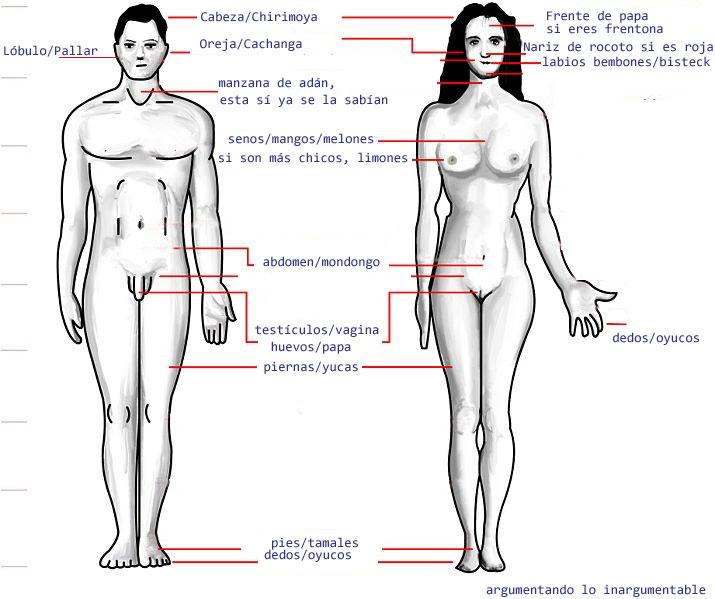 Cuerpo Humano De La Mujer